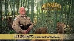 Shumakers 60 sec (1).wmv