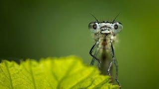 La Élite Prepara un insecto para llevar el Virus Zombie a todos los rincones del Planeta.