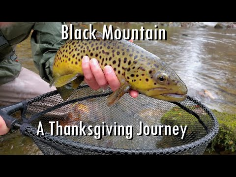 WBD -  Black Mountain A Thanksgiving Journey  Euro Nymphing & Nymphing