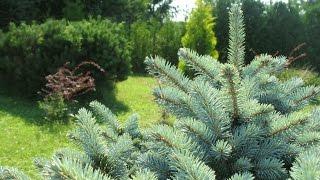 Ваш красивый сад. Деревья и кустарники в саду. Живая изгородь. Цветочные композиции.