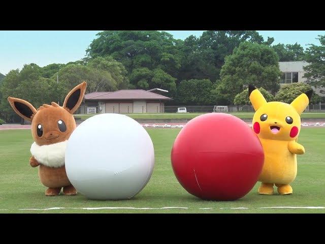 【公式】イーブイ vs ピカチュウ勝つのはどっち? 種目:大玉転がし