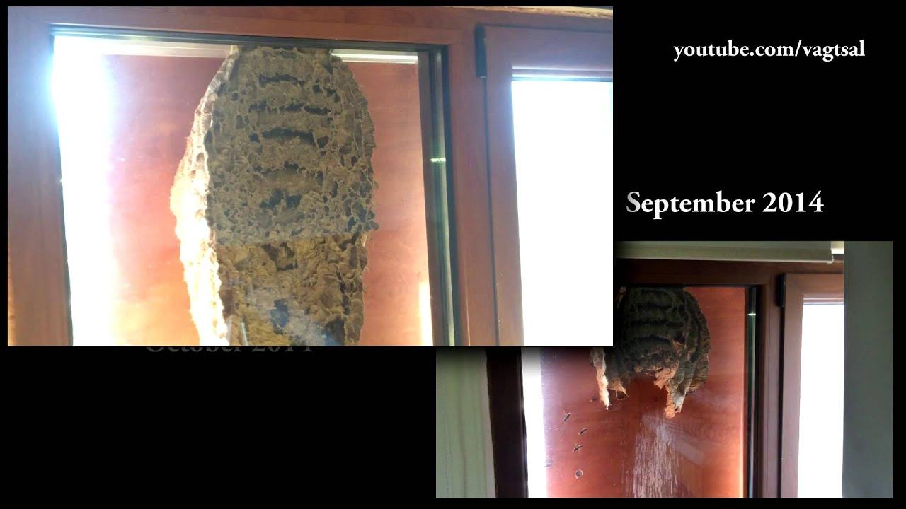蜂の巣の断面を見た事があるか?