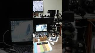 현미경 촬영 대행 (2)
