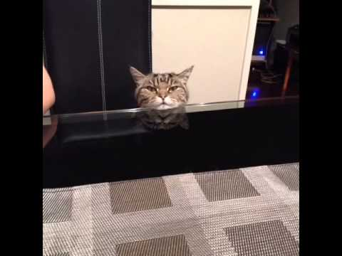 Angry Cat At Dinner Table Meme | Meme Creation