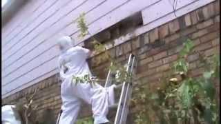 ARI İLAÇLAMA AYDIN MERKEZ İLÇELER arı mücadelesi 0544 516 02 78 Video