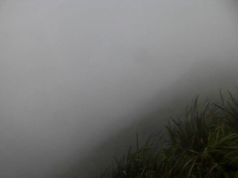 Hawaii Loa Ridge Trail