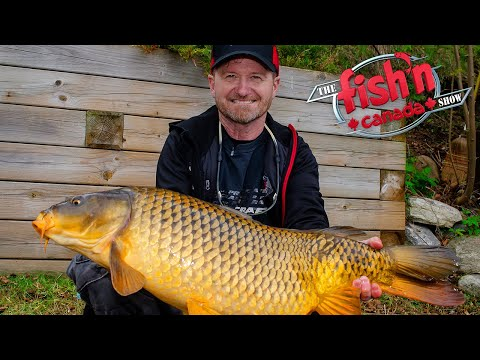 Lake Scugog Carp Takes Angler For A Ride | Fish'n Canada