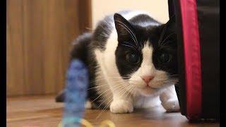 我が家の猫の紹介動画です。 今更感満載ですが、今回紹介するのは月見(...