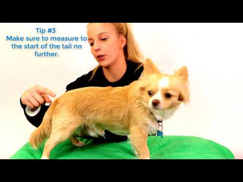 How To Measure A Dog Coat By The Vet Shed