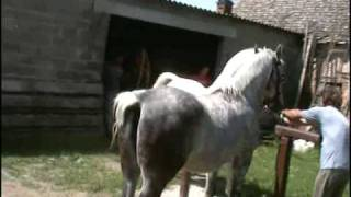 Repeat youtube video Pastuh Toplica (Otok, Slavonija) - horse sex