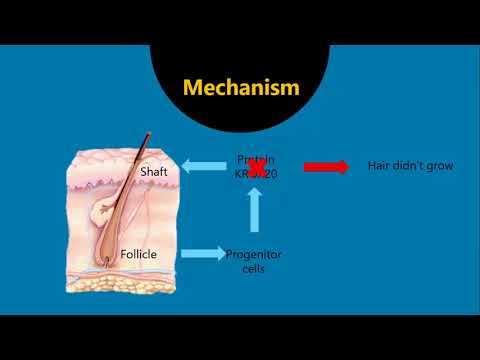 KROX20 based mechanism of Balding and hair graying- Explanation