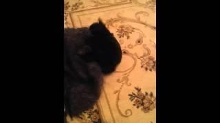 Моя злая собака (Бакс):-D(, 2016-01-17T21:51:06.000Z)
