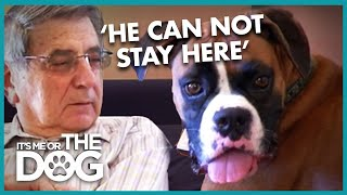 Grandpa Vs Hyperactive Boxer Dog | It's Me or the Dog