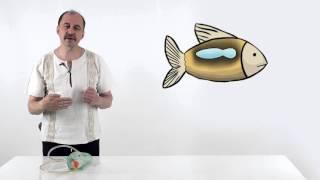 Мусорное биомоделирование. Позвоночные. Часть 1 - Рыбы.