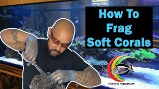How To Frag Soft Corals