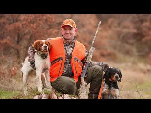 Top 10 Hunting Dogs Breeds