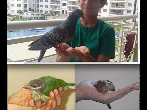 How to pet a pigeon