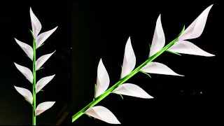Paper Crafts For School | Easy And Beautiful Paper Flowers | Paper Crafts | DIY Flowers | Home Decor