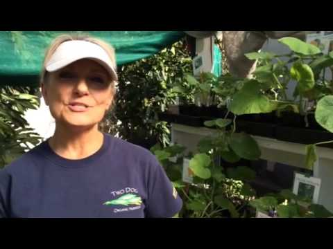 Organic Garden Center in LA