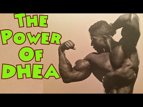 The Power Of Dhea