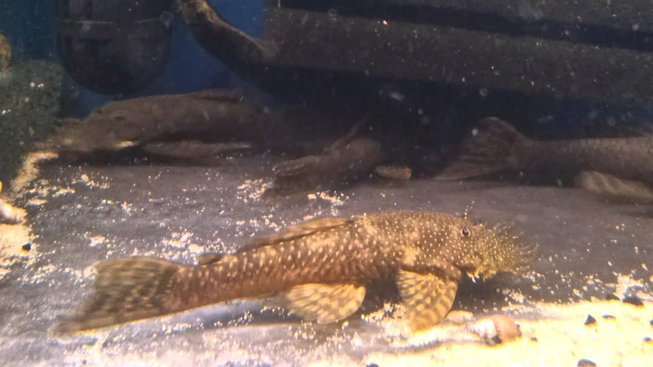 Aquarium Speciaalzaak Utaka in Amersfoort  Dierenwinkel