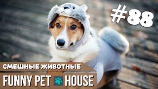 СМЕШНЫЕ ЖИВОТНЫЕ И ПИТОМЦЫ #88 АВГУСТ 2019   Funny Pet House