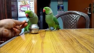 Talking Parrots - Training video