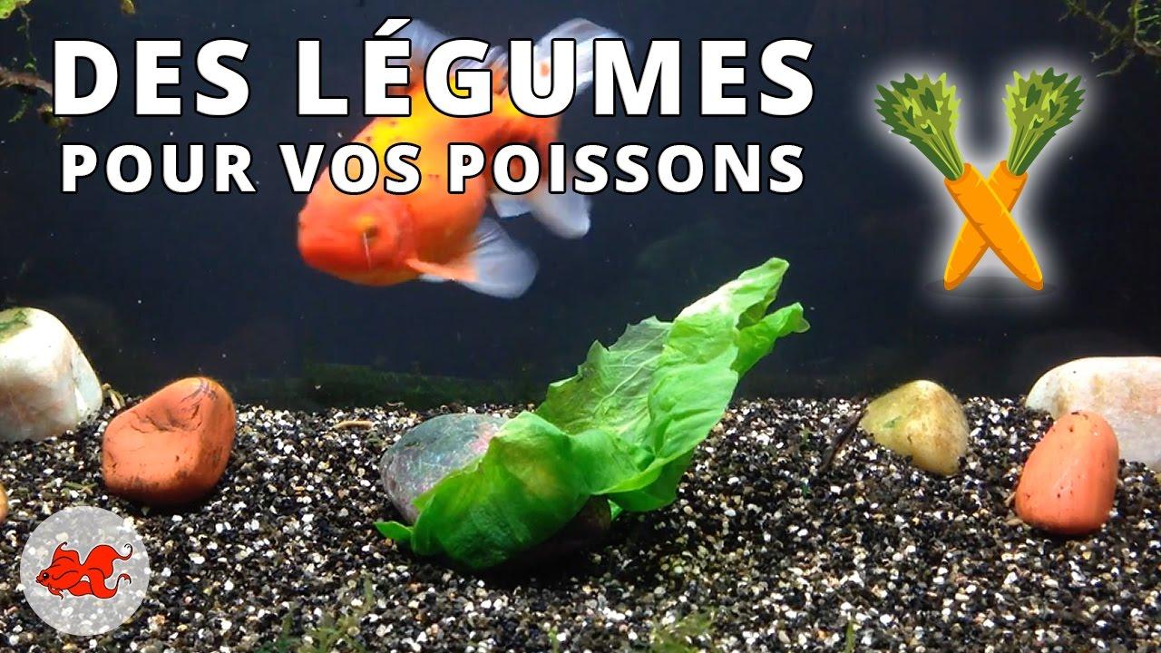 l gumes pour poissons d 39 aquarium youtube. Black Bedroom Furniture Sets. Home Design Ideas