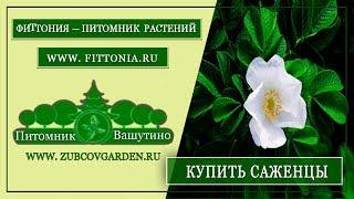 видео Цветы и Растения: Обзор подмосковных питомников