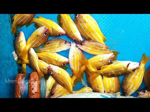 FISHERMAN CATCHED FISH AT DEEP SEA