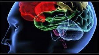 видео Память в психологии: определение, виды, теории