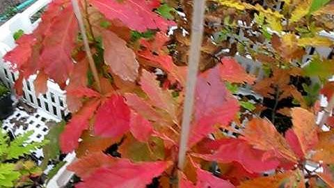 Muurilan puutarhat - Muurila Display and Testing Gardens - Sept 2008 Taimisto