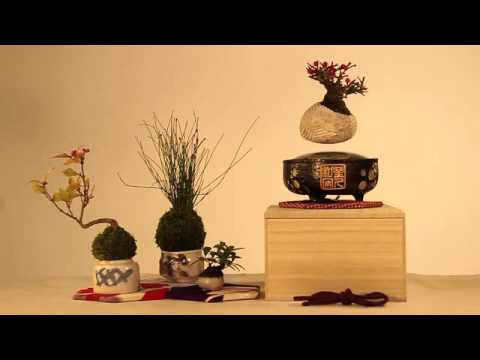 Adorable floating bonsai trees bring anime magic to your home