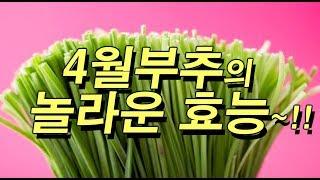 4월 부추의 놀라운 효능 7가지 ~ ♬ 최고의 항암식품~