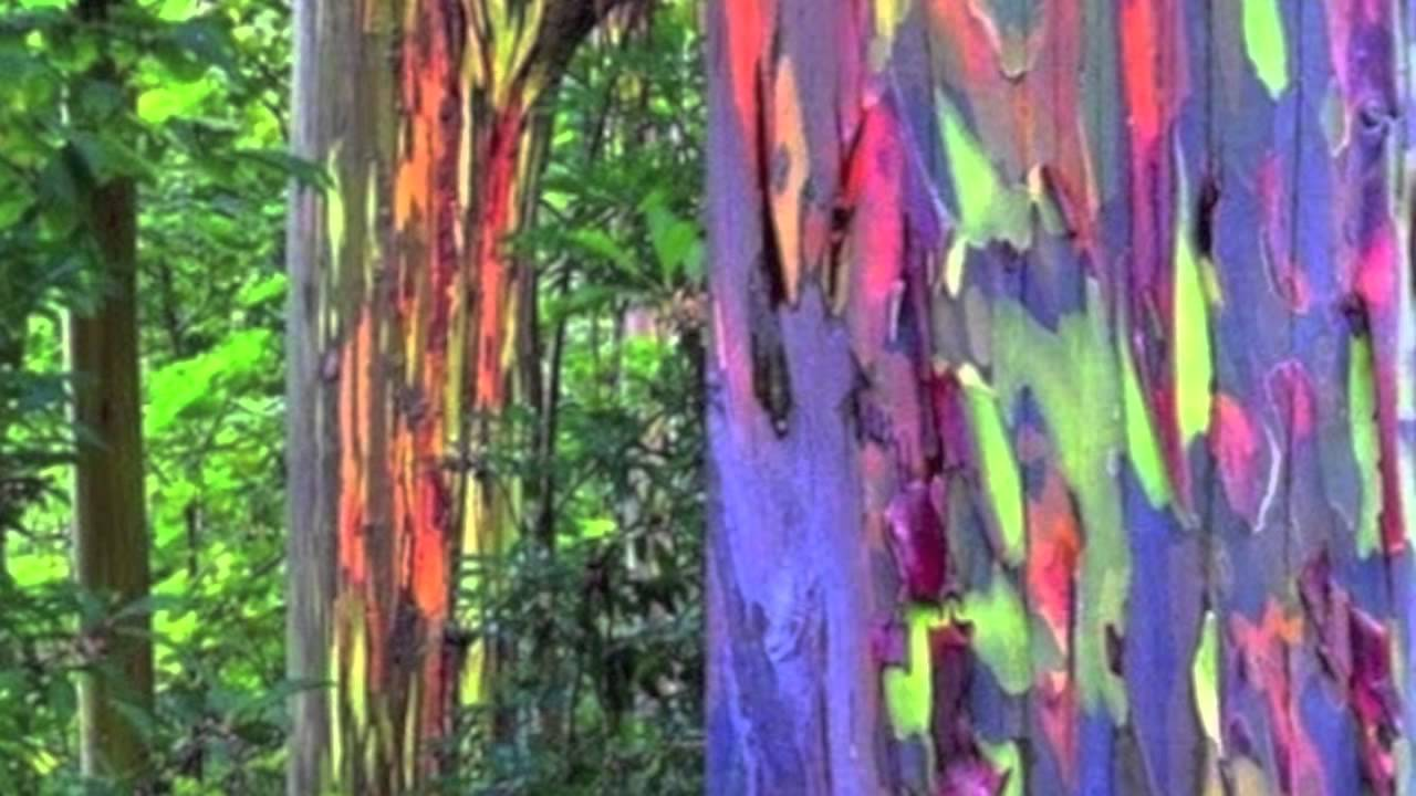 Coat Of Many Colors | Today\'s Creation Moment - YouTube