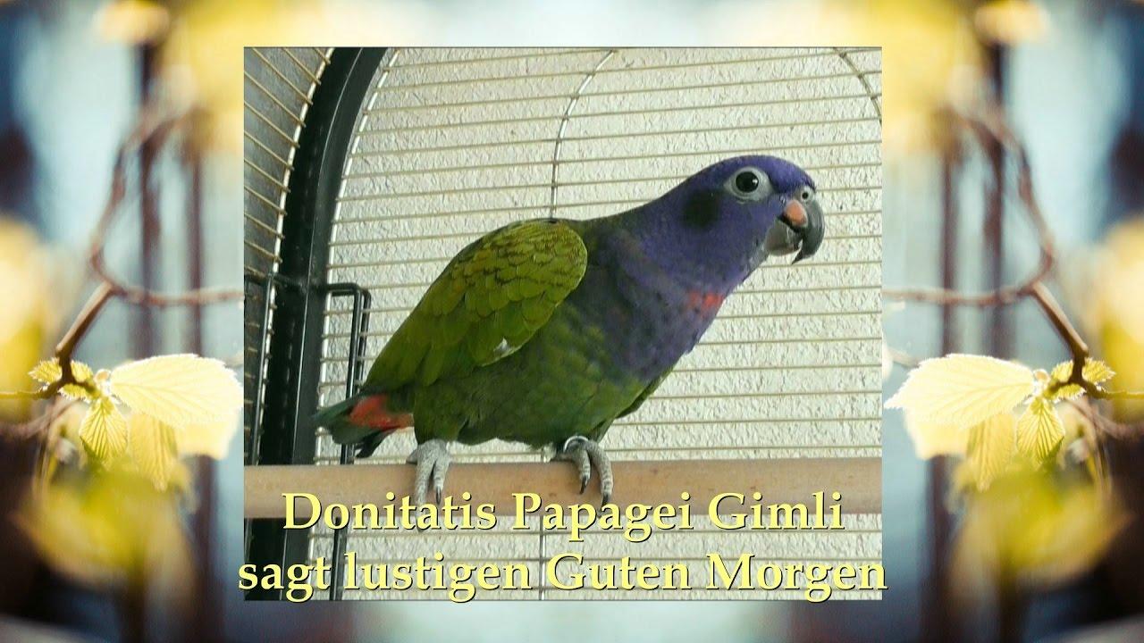 Papagei Guten Morgen Lustig