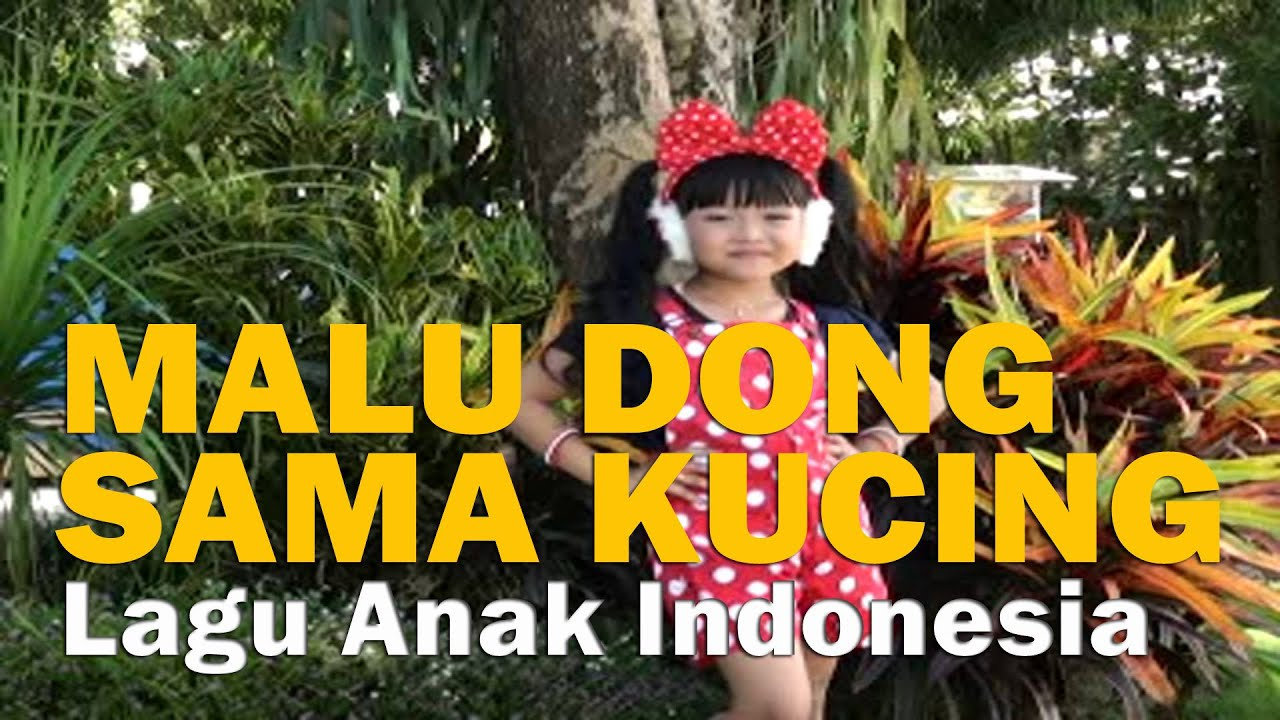 Download lagu malu dong sama kucing batu