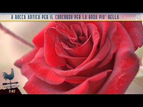 A Rocca Antica Per La Rosa Più Bella