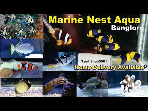 Marine Fish | Salt Water Fish Store Visiting Marine Nest Aqua Bangalore