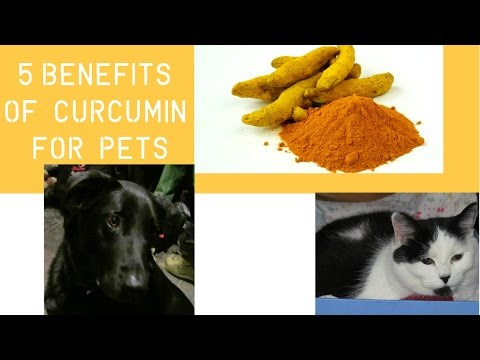 5 Proven Benfits of Curcumin For Dogs and Cats - YouTube