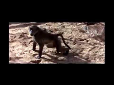 Пьяные животные после забродивших фруктов