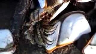 Alien Sea Creature Metropolis thumbnail