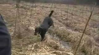 K9 Search & Rescue Training - Wilderness Air Scent