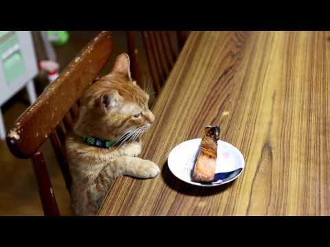 焼き鮭と猫 170123