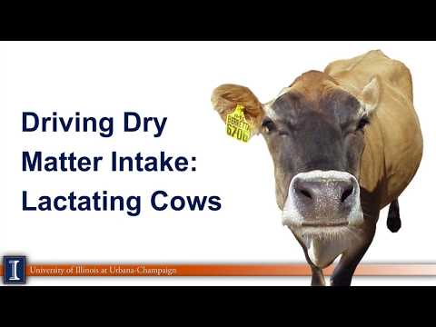 Driving dry matter intake on dairy farms