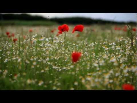 Highland Musik - Tanz mit dem Wind