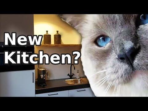 A New Kitchen? | Bowie The Ragdoll Cat