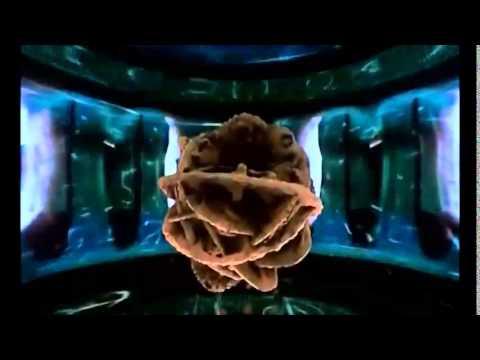 Seth.Ect-DiMethylTryptamine Album Trailer