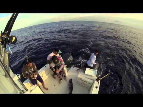 Stray Cat Offshore Fishing Bermuda