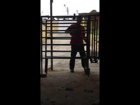 team roping instructional videos